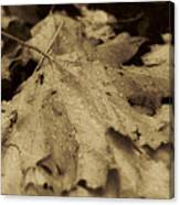 Autumn In Sepia Canvas Print