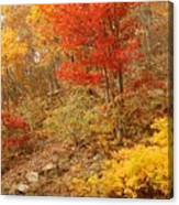 Autumn In Shenandoah Canvas Print