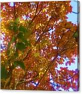Autumn In The Canopy Canvas Print
