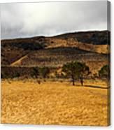Autumn In The High Desert Canvas Print