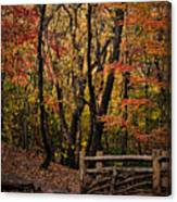 Autumn In The Rambles Canvas Print