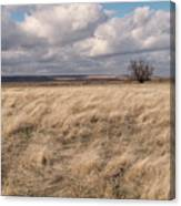 Autumn In The Steppes Canvas Print