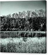 Autumn In The Wetlands - Black And White Canvas Print