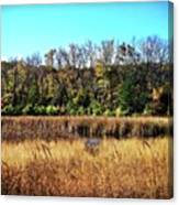 Autumn In The Wetlands Canvas Print