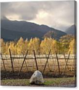 Autumn In The Winelands Canvas Print