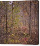 autumn In The Woos Canvas Print
