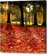 Autumn In Woodthorpe Canvas Print