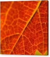 Autumn Intensity Canvas Print