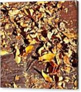 Autumn Is On The Way Canvas Print