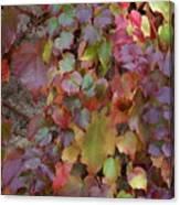 Autumn Ivy Canvas Print