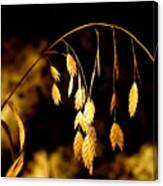Autumn Jewelery Canvas Print