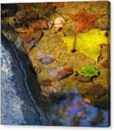 Autumn Jewels Canvas Print