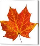Autumn Leaf 3 Canvas Print