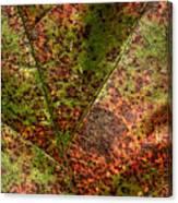 Autumn Leaf Detail Canvas Print