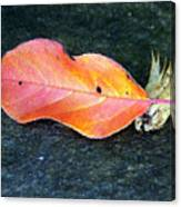 Autumn Leaf In August Canvas Print