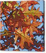 Autumn Leaves 17 - Variation  2 Canvas Print