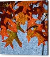 Autumn Leaves 20 Canvas Print
