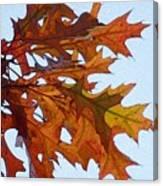Autumn Leaves 21 Canvas Print