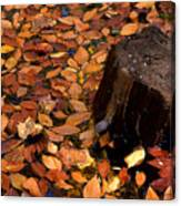 Autumn Leaves And Tree Stump Canvas Print