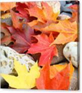 Autumn Leaves Art Print Coastal Fossil Rocks Baslee Troutman Canvas Print