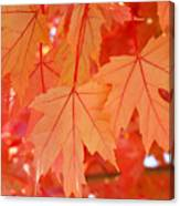 Autumn Leaves Art Prints Orange Fall Leaves Baslee Troutman Canvas Print