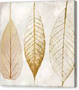 Autumn Leaves IIi Fallen Gold Canvas Print