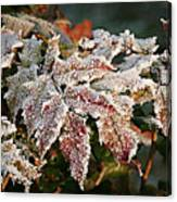 Autumn Leaves In A Frozen Winter World Canvas Print