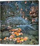 Autumn Leaves In Waterfall Canvas Print