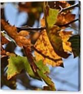 Autumn Leaves Macro 1 Canvas Print