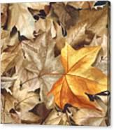 Autumn Leaves Series 2 Canvas Print