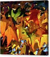 Autumn Leaves2 Canvas Print