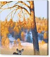 Autumn Light ... Montana Art Photo Canvas Print
