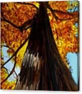 Autumn Majesty Canvas Print