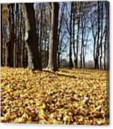 Autumn Maple Forest - Massachusetts Usa Canvas Print