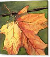 Autumn Maple Leaf Canvas Print