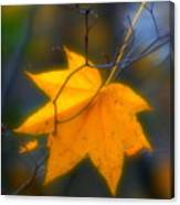 Autumn Maple Leaf Canvas Print