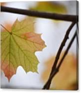 Autumn Maple Leaves Horizontal Canvas Print