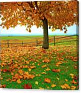 Autumn Maple Tree And Leaves Canvas Print