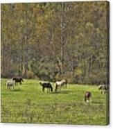 Autumn Meadow Canvas Print