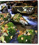 Autumn Monongahela National Forest Canvas Print