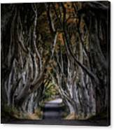 Autumn Morning At Dark Hedges Alley  Canvas Print