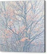 Autumn Morning Sugar Maple Canvas Print