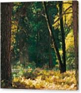 Autumn Morning Yosemite National Park Canvas Print