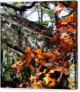 Autumn Moss Canvas Print