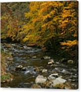 Autumn Mountain Stream Canvas Print