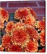 Autumn Mums - Against Brick Canvas Print