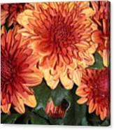 Autumn Mums - Touching Canvas Print