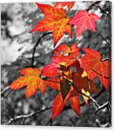 Autumn On Black And White Canvas Print