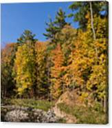 Autumn On The Riverbank - The Changing Forest Canvas Print