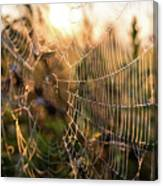 Autumn Orb Weaver Canvas Print